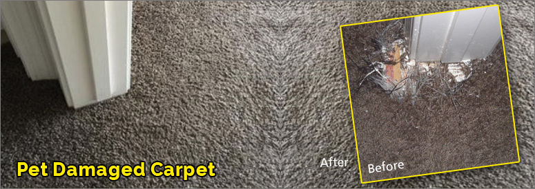 Pet Damaged Carpet Malibu
